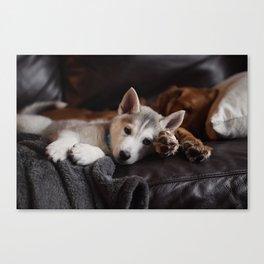 Dog by Mark Zamora Canvas Print