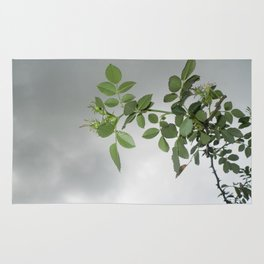 grey on green Rug