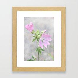 Pink Mallow Framed Art Print