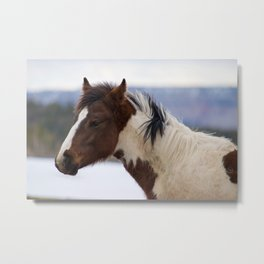 Tri-Colored Horse Metal Print