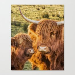 Mother and child. Highland Cows of Scotland....(heilan coo's) Canvas Print