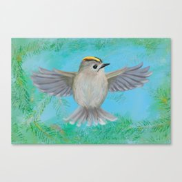 Goldcrest in top Canvas Print