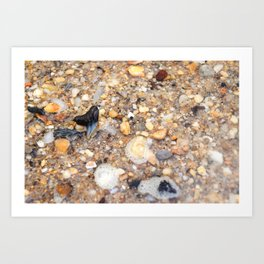Virginia - Find the Fossil Shark Tooth Art Print