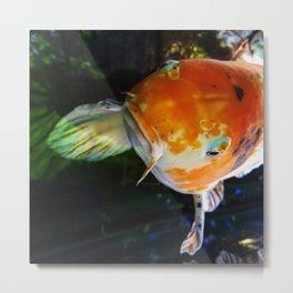 Put a Koi on It! Metal Print