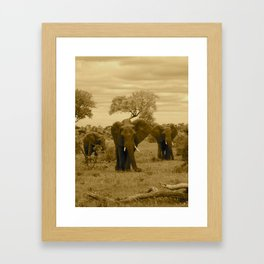 Elephant sepia Framed Art Print