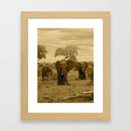 Elephant sepia Framed Art Print