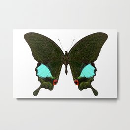 Butterfly species Papilio Karna Karna Metal Print
