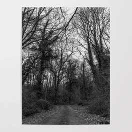Monochromatic forest path Poster