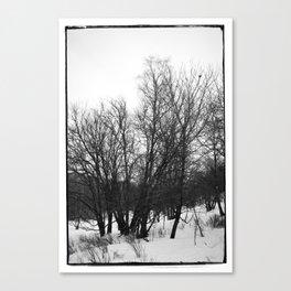 Norwegian forest VI Canvas Print