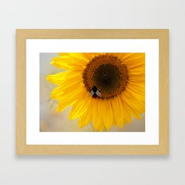 The Bee and the Sunflower Framed Art Print