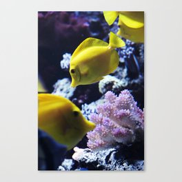 Under the Sea Swimming Yellow Fish Coral Reef Sea Anemone Underwater Photography Wall Art Print Canvas Print