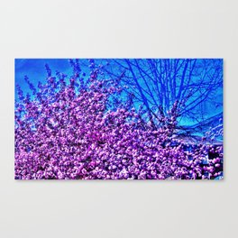 Spring View Canvas Print