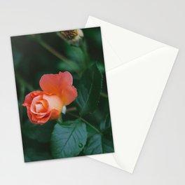 Joseph's Coat Rose Matte Stationery Cards