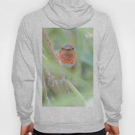 An Allen's Hummingbird Amid Mexican Sage Hoody