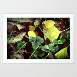 Frosty Leaves and Lawn Art Print