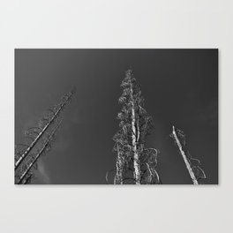 Dead Trees Together Canvas Print
