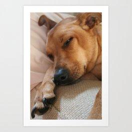 Dog Daze  Art Print
