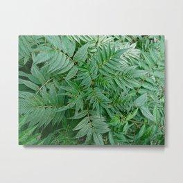 Leafy Metal Print