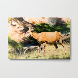 Red deer cow Metal Print