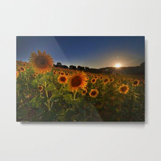 """Sunflowers following the sun"" Metal Print"