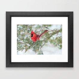Cocky Cardinal Framed Art Print
