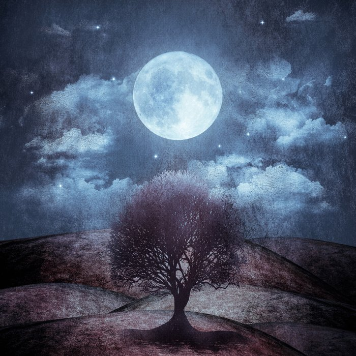 Once upon a time... The lone tree. Comforters