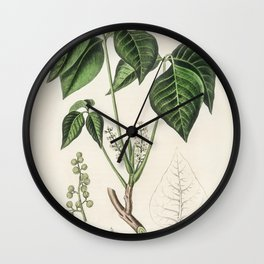 Poison ivy (Rhus toxicodendron)  from Medical Botany (1836) by John Stephenson and James Morss Churc Wall Clock