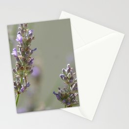Lavanders 1 Stationery Cards