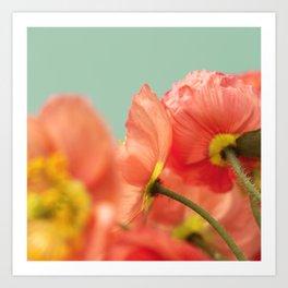 Pastel Poppy # Art Print