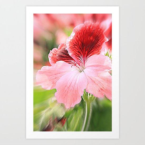 dianthus chinensis Art Print