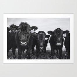 four cows black and white Art Print