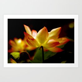 Golden Lotus Art Print