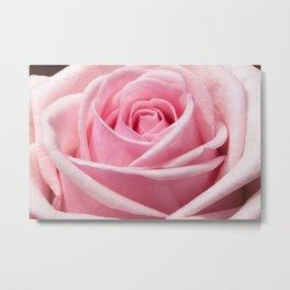 pink rose #society6 #decor #buyart Metal Print