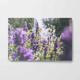 Purple Haze, II Metal Print