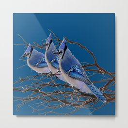THREE AMERICAN BLUE JAYS ART BLUE WINTER ART Metal Print