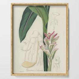 White turmeric (Curcuma zedoaria)  from Medical Botany (1836) by John Stephenson and James Morss Chu Serving Tray