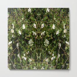 Dog Rose Metal Print