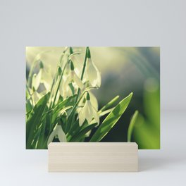 Snowdrops impression from the garden Mini Art Print