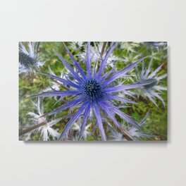 A thistle with style Metal Print