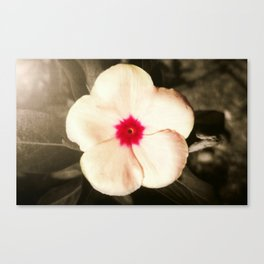 A Small Pink Creature II Canvas Print
