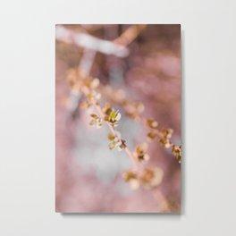 pink blossom 2 Metal Print