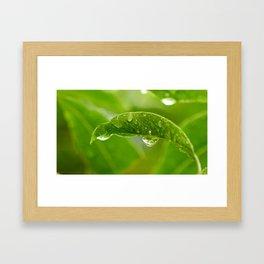 Rain Drops on Leaf Framed Art Print