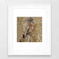 camouflage Framed Art Prints featuring Camouflage by owlgoddessphotography