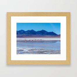 Flamingoes in the Atacama Desert, Bolivia Framed Art Print