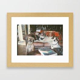 Reggies Rock Pups Framed Art Print