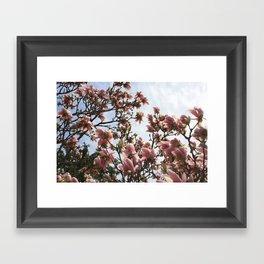 Spring Magnolias Framed Art Print