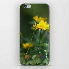 Sunny Road iPhone & iPod Skin