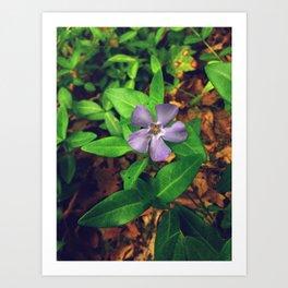 Fiore Viola Art Print