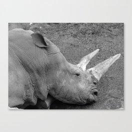 Rhinoceros Canvas Print
