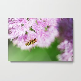 Hoverfly on Allium - Onion Flower 1 Metal Print